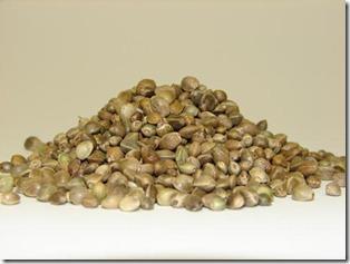 semine-de-canepa